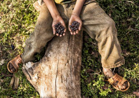 Большинство диких видов кофе, включая арабику, находятся под угрозой вымирания