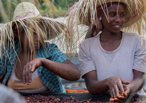 Все, что вам необходимо знать о кофе из региона Сидама, Эфиопия